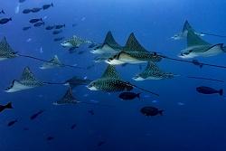 Fotosub all around the oceans