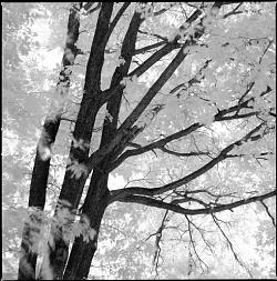 2017 Light inside the Tree