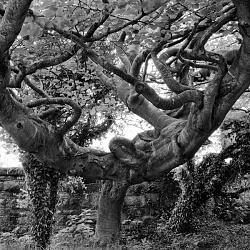 Ireland of Trees