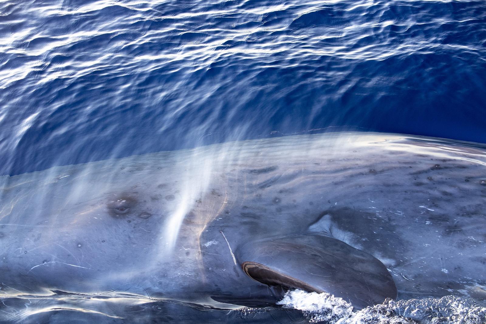 Elia the sperm whale - August 2020, Genoa, Italy