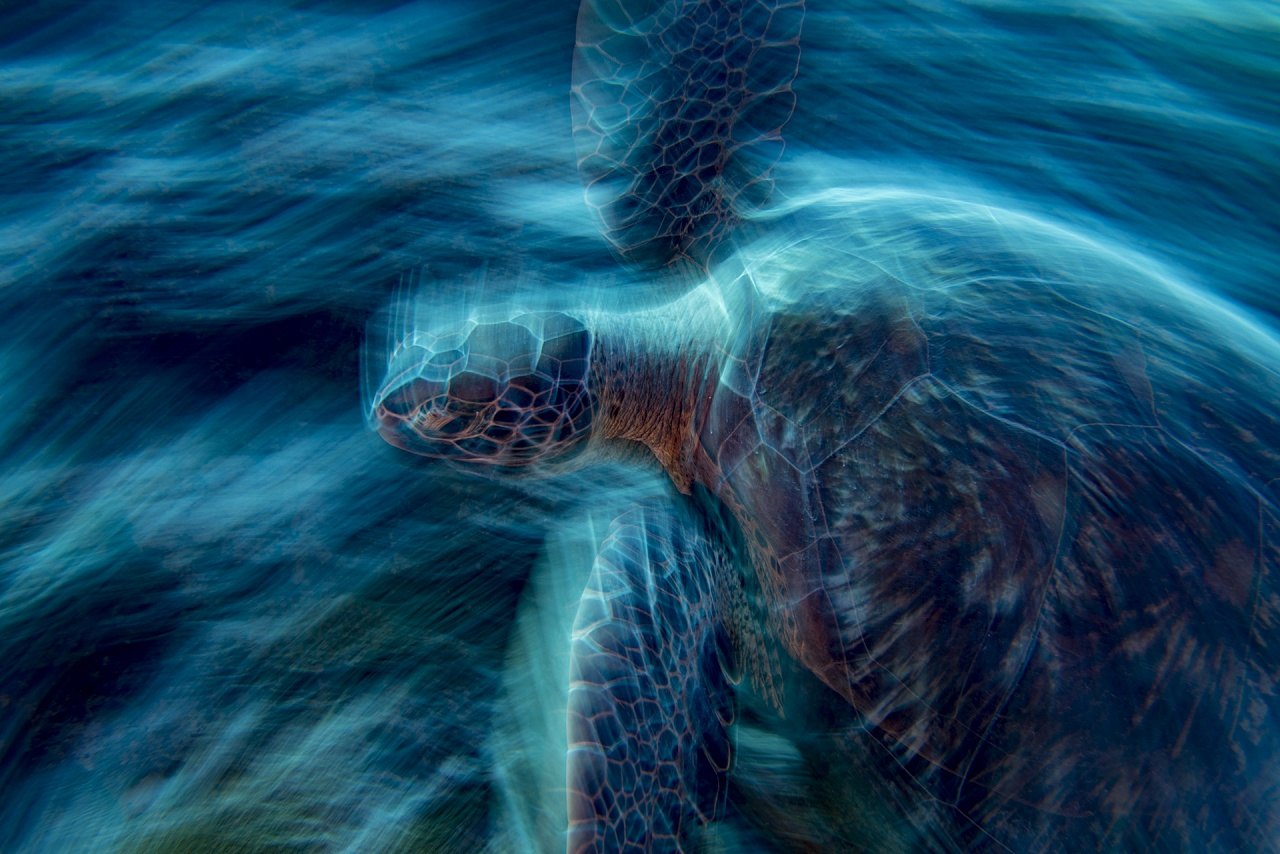 The Ghost Turtle - Scatto Vincitore categoria subacquea Asferico 2019, Finalista WPOTY 2019 e TPOTY 2018