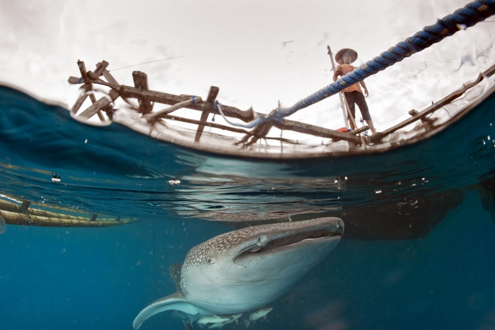 Uomini e squali - Gli squali balena volteggiano sotto una piattaforma di pescatori in cerca di gustosi pesciolini, una giusta variazione alla dieta a base di plancton. Foto Finalista al concorso internazionale Travel Photographer of The Year 2012 nella categoria One Shot - Water