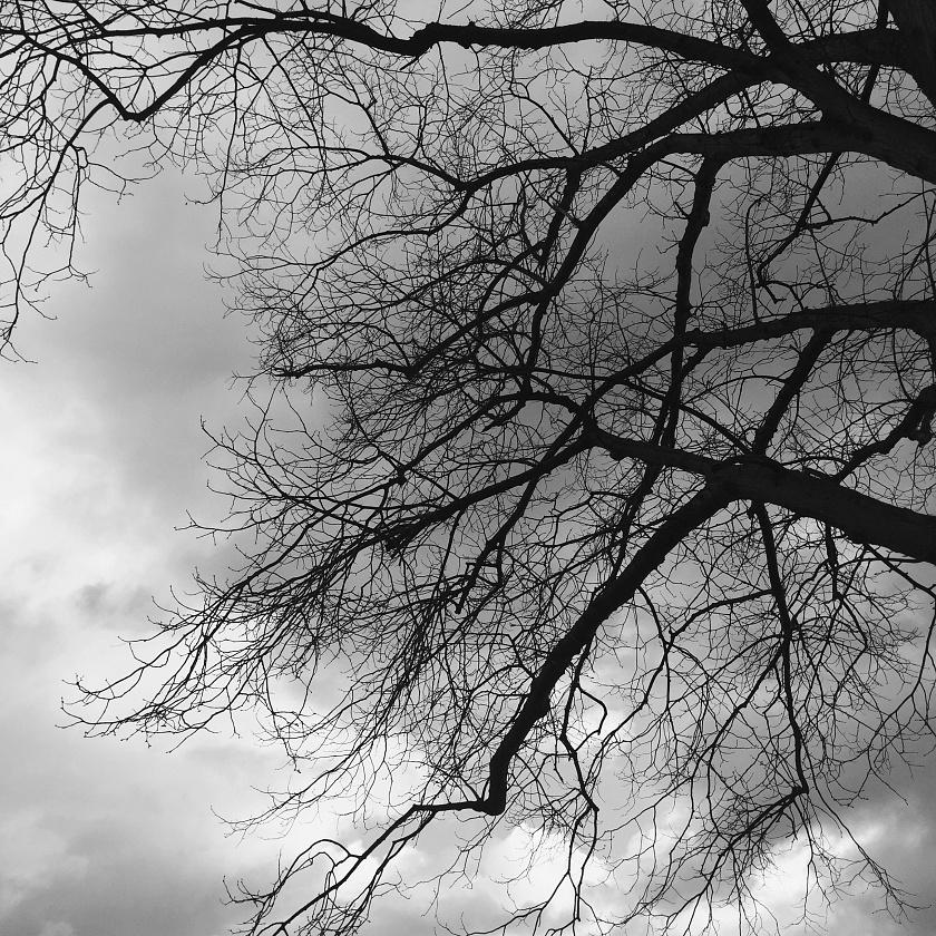 Trees (Fotofever, Paris 2017)